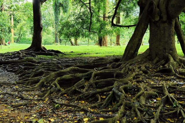 fotografii-porazitelnoy-dikoy-prirodi2