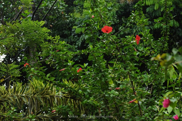 fotografii-porazitelnoy-dikoy-prirodi34