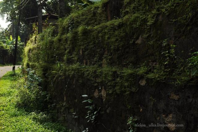 fotografii-porazitelnoy-dikoy-prirodi40
