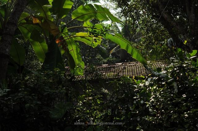 fotografii-porazitelnoy-dikoy-prirodi42