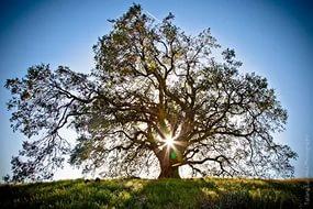 drevo-zhizni2