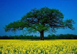 drevo-zhizni4