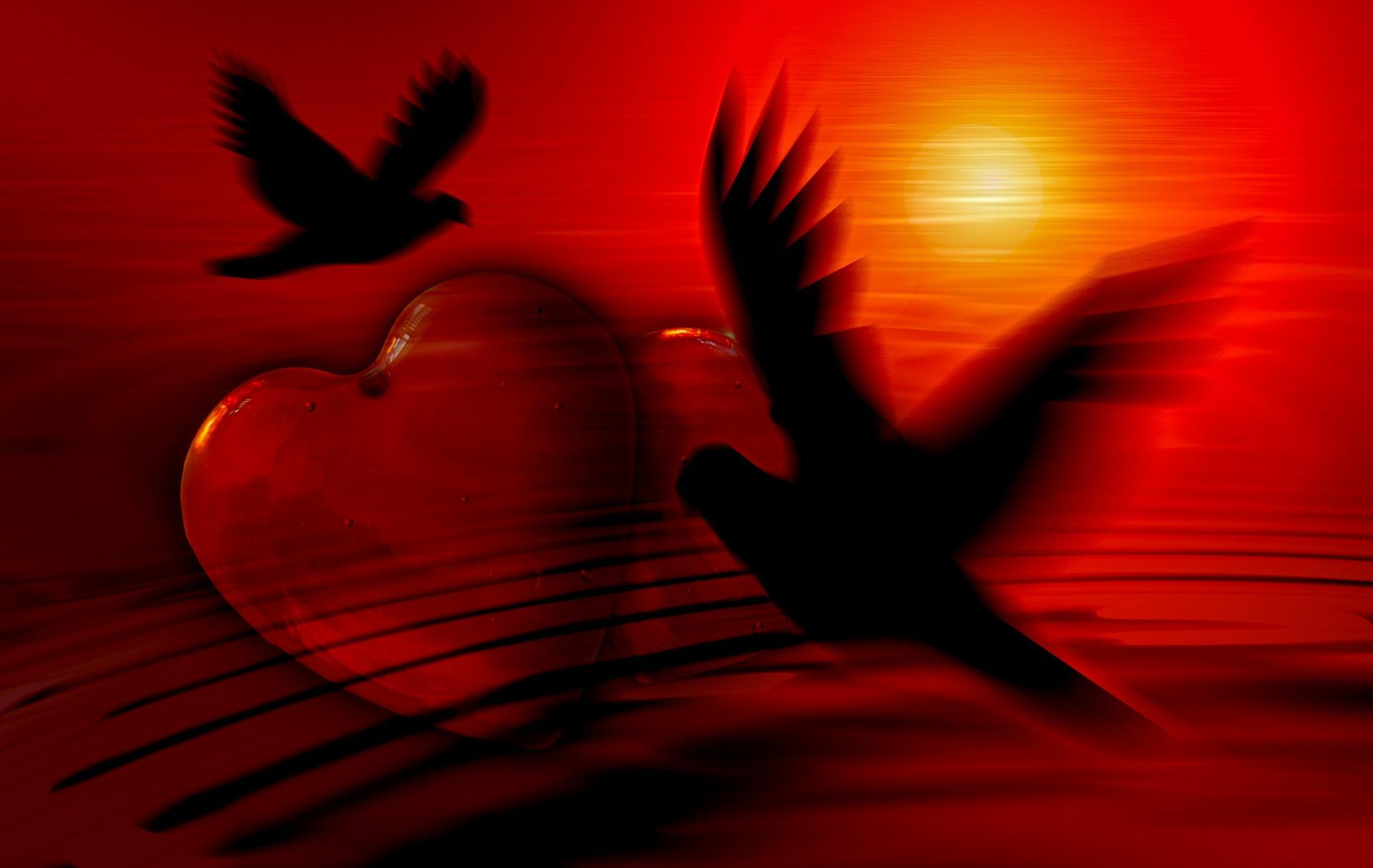 Гортензия, картинки сердце голуби