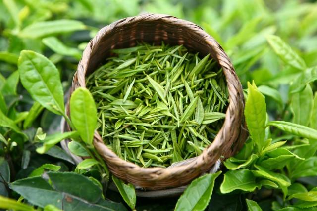 зеленый, чай, польза, вред, здоровье, питание, здоровое, полезное