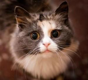 польза кошек, кошка друг человека, кошка в доме польза, кошка ушла из дома, лечащие кошки, кошки лечат людей, домашняя кошка, кошки лечат
