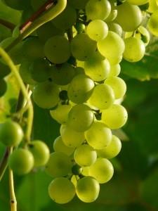 grapes-9215_960_720
