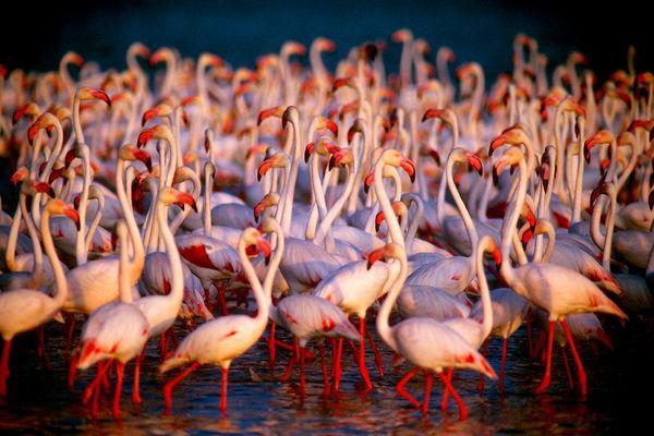 699_nacionalnyj-park-etosha-namibiya