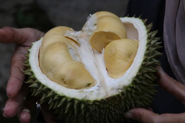 Дуриан фрукт, чем пахнет дуриан, дуриан вкус, дуриан свойства, как едят дуриан, плод дуриан, дуриан вред, дуриан полезные свойства