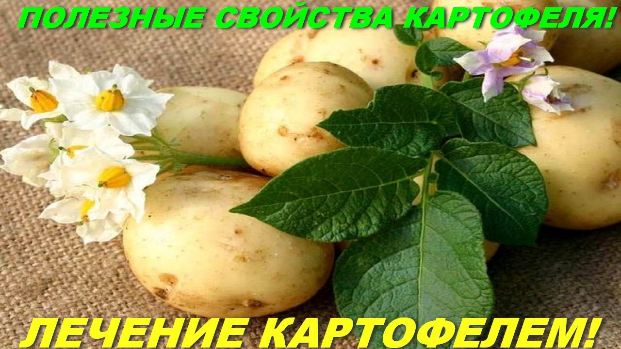 всего коллаж на тему картофель фото какой степени это